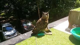 Смешные совы и филины Чудеса природы Смешные птицы Приколы 2017   МатроскинТВ