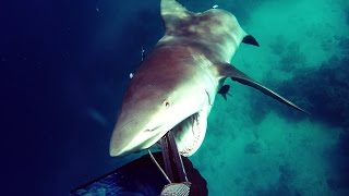 Shark Attack - Bullshark Attacks Spearfisherman