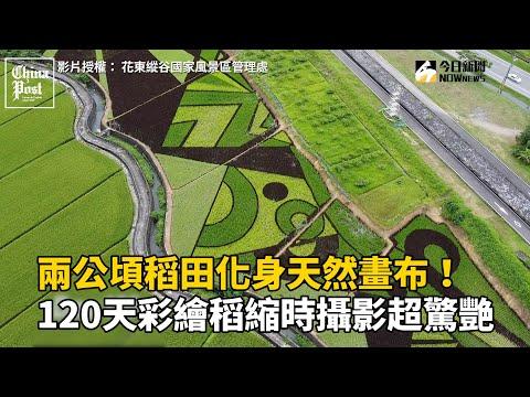 兩公頃稻田化身天然畫布!120天彩繪稻縮時攝影超驚艷