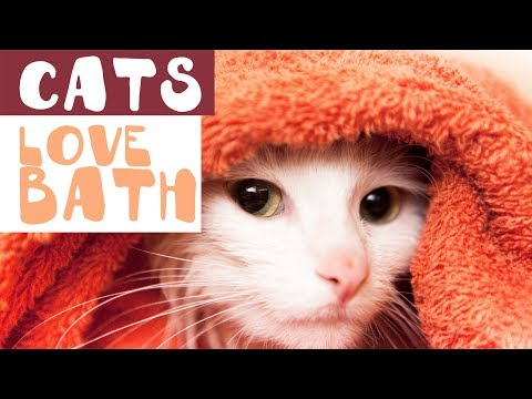 Cats Just Want To Bath (NEW) - Funny Cat Bathing Compilation