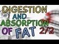 Digestion and Absorption of Fat - Part 2/2