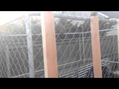 Macgyver Greenhouse How To Turn An Unused Dog Kennel
