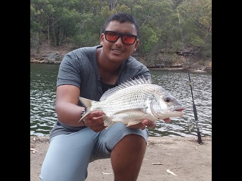 Bream Fishing Sydney