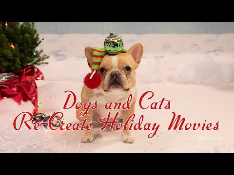 Dogs and Cats Re-Create Holiday Movies