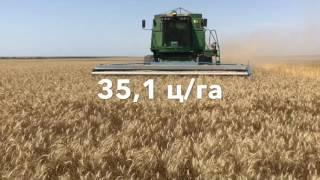 Результаты опытов на широкорядных посевах пшеницы