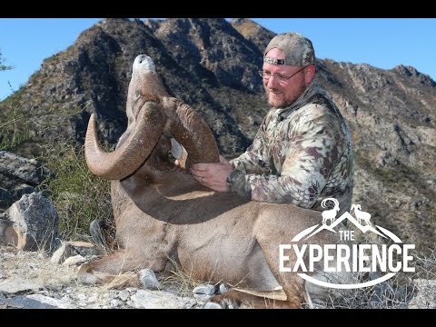 MEXICO DESERT BIGHORN SHEEP HUNTING
