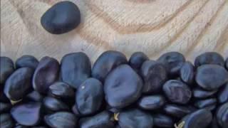 Как приготовить бобы