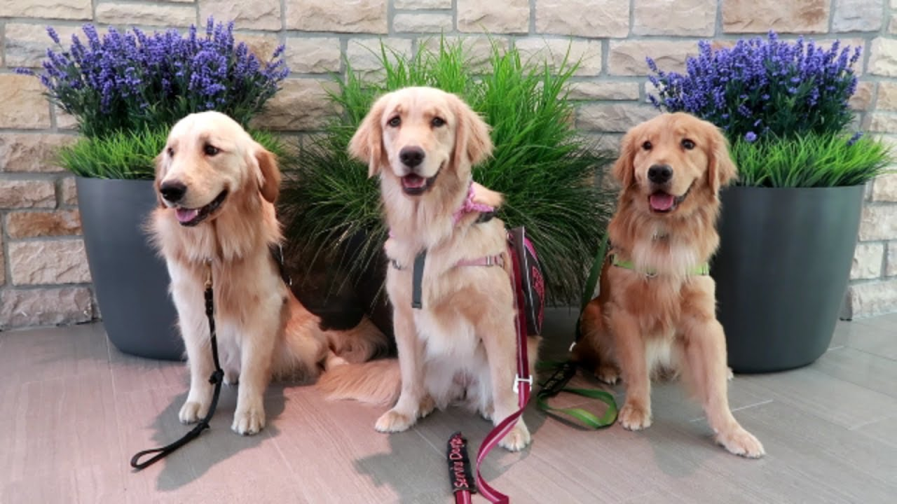 Watch 7 Service Dogs That Save Lives video