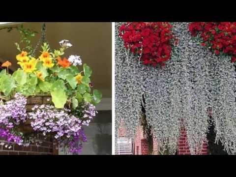 30 гениальных идей как создать цветочный рай у себя на даче