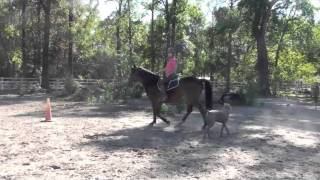 Morgan Horse Gelding for Sale Thumbnail
