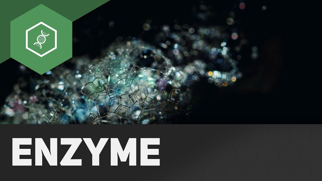 enzyme beispiele
