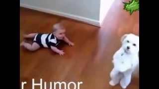 Смешное видео про маленьких детей и животных  Funny video about small children and animals