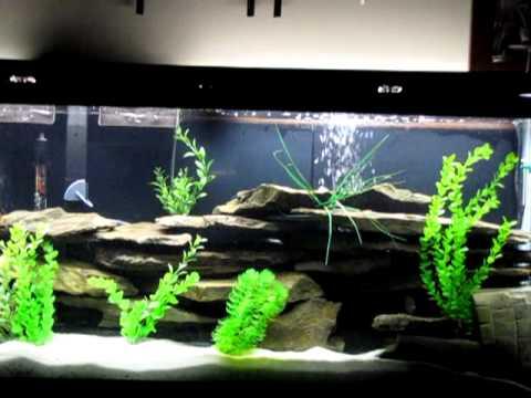 55 Gallon New Aquarium Setup Youtube