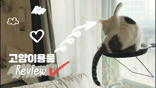 고양이와 살 때 필요한 고양이용품 8가지(8 Usefu…