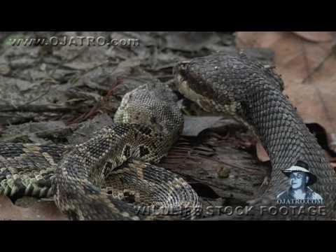 Вопрос: Как дерутся змеи?