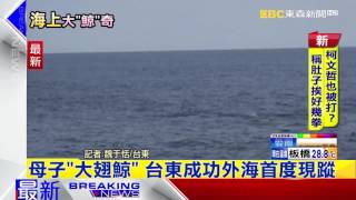 最新》母子「大翅鯨」 台東成功外海首度現蹤