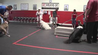 Training A Dog Agressive Pit Bull | Sitmeanssit.com