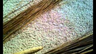 How To Make A Besom Broom- Bristles