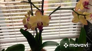 💐12💐Уход за орхидеями 💐#орхидеи #уходзаорхидеями