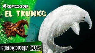 CRIPTOZOOLOGIA #6 EL TRUNKO EL PELUDO MONSTRUO MARINO @OxlackCastro