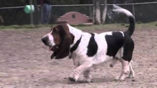 Secrets Of The Dog Park - Basset Hound