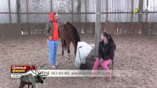 Хочу лошадь