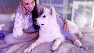 Gibi ASMR | vibing with my dog (all about my Swiss Shepherd!)