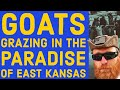 Goats Grazing in the Paradise of East Kansas