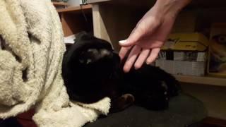 Наш кот Шон впервые нюхает валерьянку