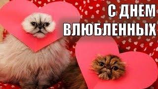 14 февраля - ДЕНЬ ВАЛЕНТИНА 2018! Поздравление с Днем Валентина ДЕНЬ ВЛЮБЛЕННЫХ Коты это любовь