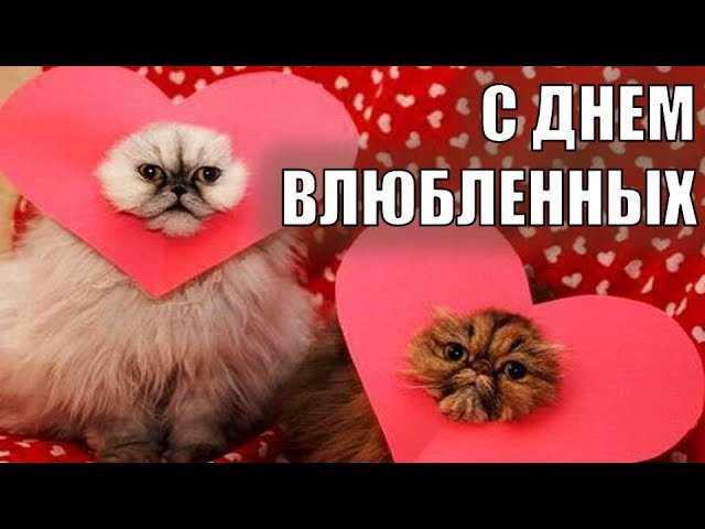 14 февраля - ДЕНЬ ВАЛЕНТИНА 2018! Поздравление с Днем Валентина ДЕНЬ ВЛЮБЛЕННЫХ Коты это любовь #1