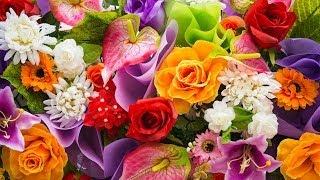 Высадка цветов в открытый грунт. Час у дачи 26/04/2014 GuberniaTV(Дача - это свой индивидуальный уголок природы. И то, как будет выглядеть этот уголок, зависит только он самих..., 2014-04-26T04:51:13.000Z)