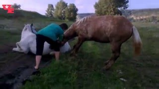 Человек спасает животных