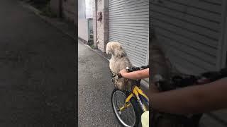 おもしろい犬funny dog