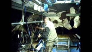 la traite des vaches dans la lozère moderne.wmv
