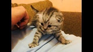 Котята бывают Разные!