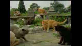 Коты наркоманы.3gp