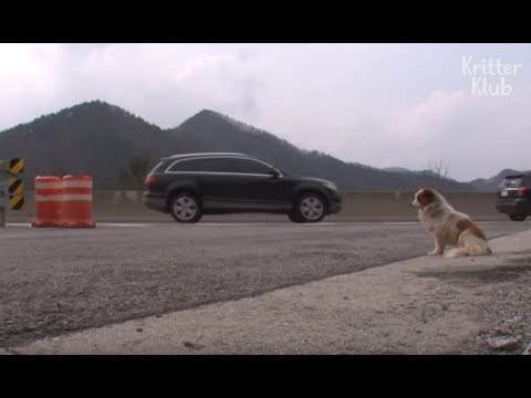 Dog Left To Die In The Middle Of An Expressway   Animal in Crisis EP26