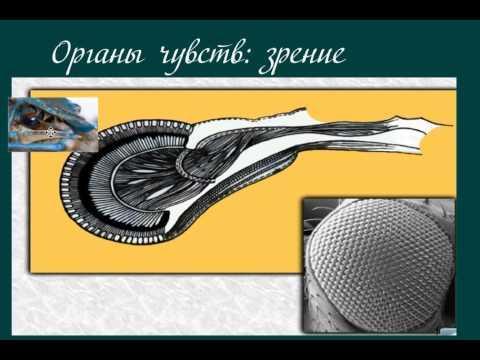 Серый журавль птица Красной книги описание с фото