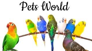 Home Pets | Aquarium Pets|Rhythm Tasty Art By Hawa