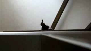 階段上から、下の様子をこっそりのぞく風太。 「家政婦は見た!」っぽく...