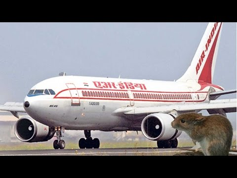 Air India flight called back to Mumbai after Rat detected