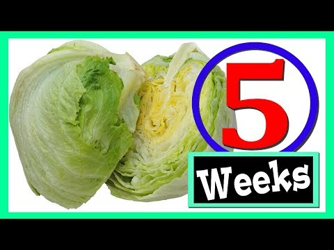 how-to-keep-lettuce-fresh