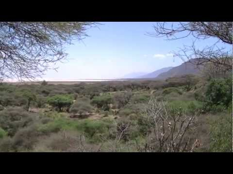 Guide to Lake Manyara National Park, Tanzania