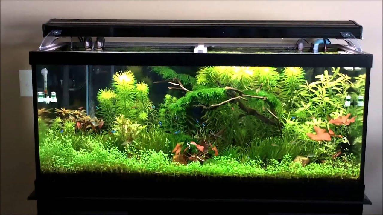 Fish aquarium rates in delhi - Fish Aquarium Rates In Delhi 56