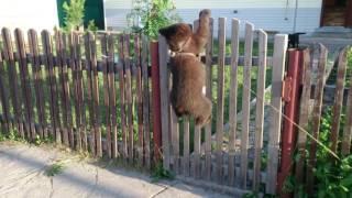 Поймали медведя возле дома!