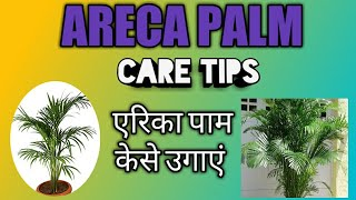 How to take Care of Areca palm | care tips areca | how to grow areca palm in hindi एरिका पाम कि केयर