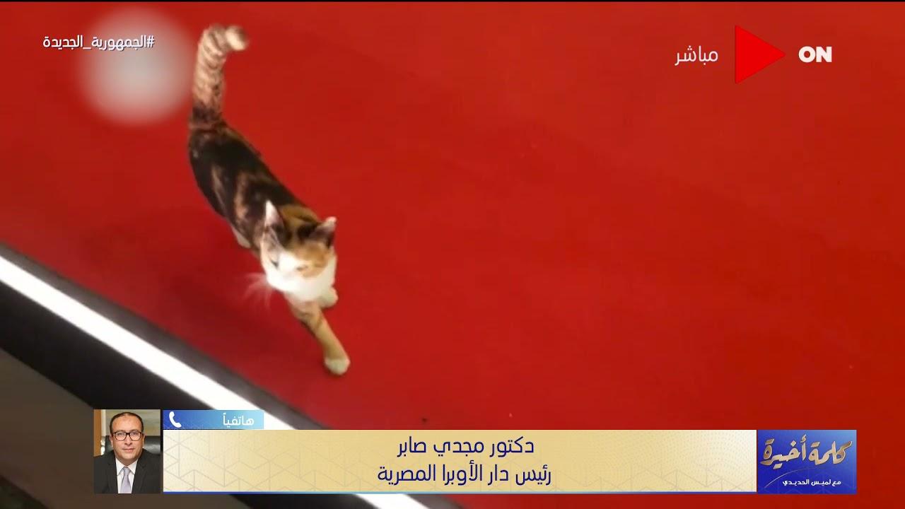 رئيس دار الأوبرا عن إختفاء أشهر قطة دار الأوبرا: مش شغلتي..أتصلنا بالجهات المختصة بيطريا للتخلص منها  - 22:54-2021 / 6 / 19