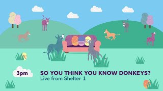So you think you know donkeys? (Live) | Sanctuary From Your Sofa