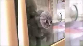 Смешные Котята Видео Про Котят Приколы с животными Приколы с Animal funny